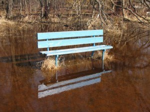 Maple Grove Bench